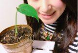 観葉植物でパワーアップ!幸運を引き寄せる『モンステラ』